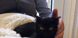 Tierheim Hameln Zuhause gesucht Katze