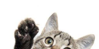 Internationale Katzenausstellung - Hameln