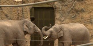 Elefanten-Zoo