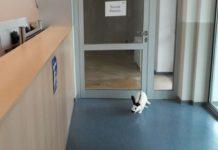 Polizeistation Hameln Kaninchen