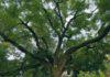 Bäume Schwarzbuch Hameln