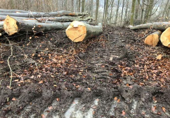 Forstunternehmen verursacht Schäden am Schweineberg