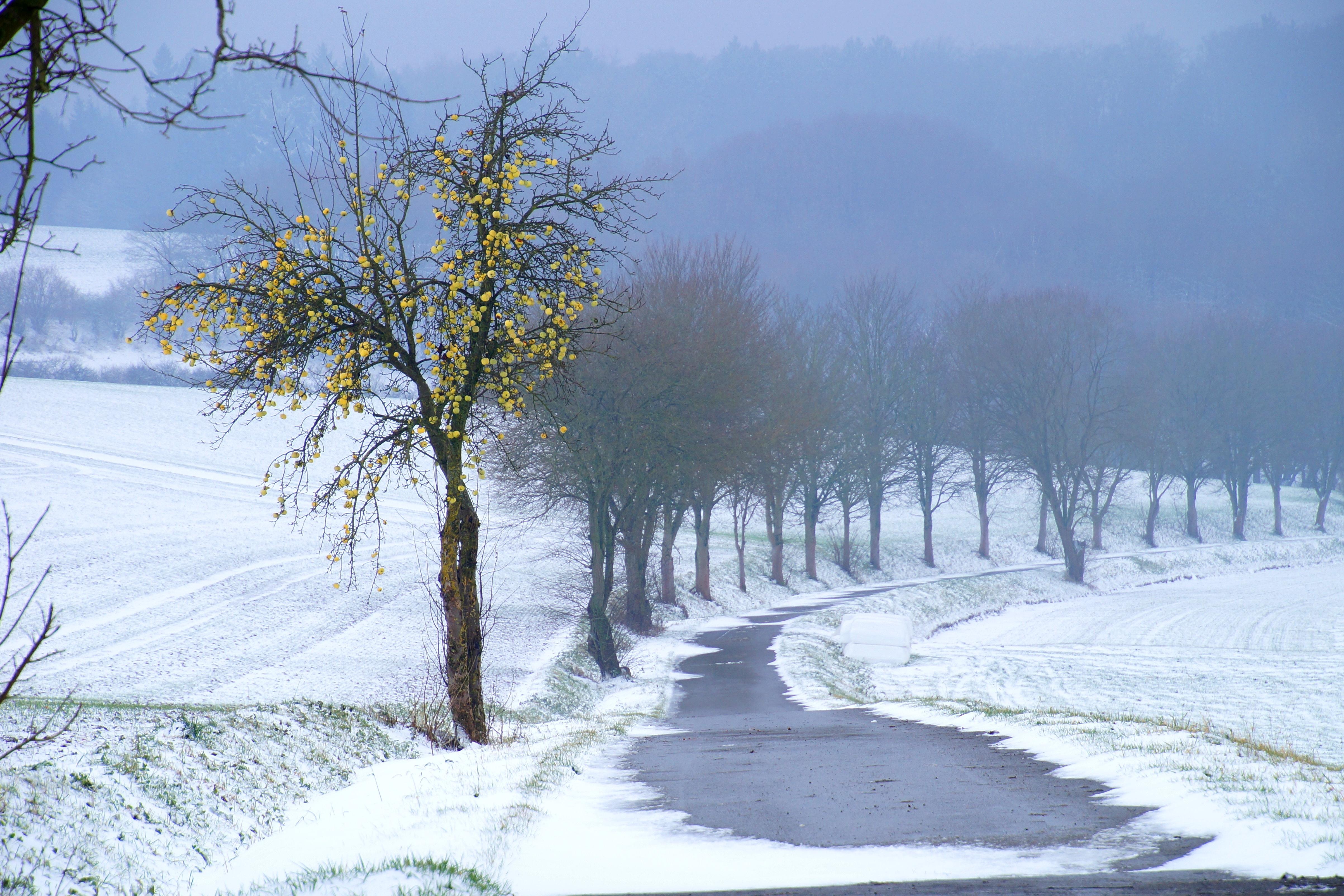 Januar Winter Bild des Monats