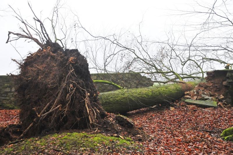 Baum Wisengehge Springe Sturm