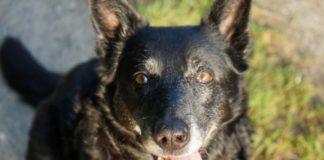Cita Hund Hundesteuer Pflege