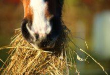 Heu Pixabay Pferd