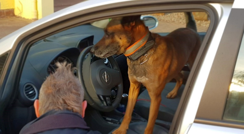 Polizei_Drogenspürhund_Cash
