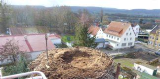 Nest Störche Hessisch Oldendorf