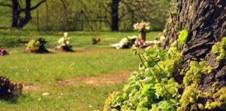Baum_Friedhof_Gräber_Pixabay