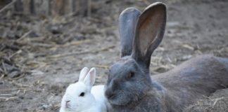 März2019_Bild des Monats_Foto 2 von Tierschutzhof Hachmühlen