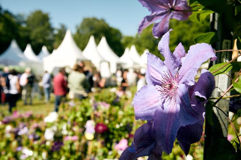 Gartenfestival Herrenhausen_Pressefoto Blume 2019_web