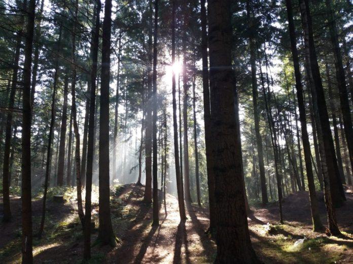 Wald Baum Natur