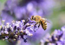 Biene Insekten Naturschutz