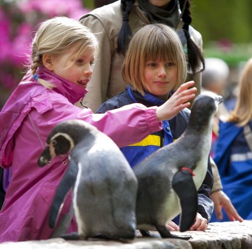 weltvogelpark_Pinguine