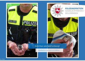 Polizei Hamlen Kätzchen