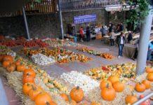 Kürbismarkt in Polle
