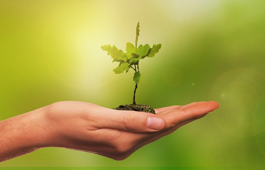 Baum_Setzling_Hand-Pixabay_web
